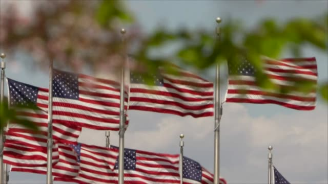 american flags flying in washington usa - stars and stripes stock videos & royalty-free footage