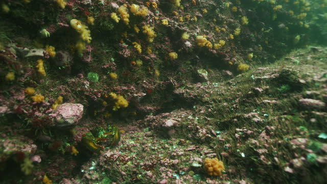 american lobster underwater - north atlantic ocean stock videos & royalty-free footage