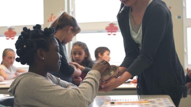 american school education activities children classes presentation - hedgehog stock videos & royalty-free footage