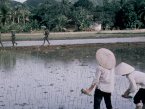 american soldiers walk through paddy field in vietnam - vietnam war stock videos & royalty-free footage