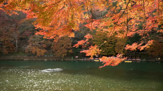 amid autumn leaf forest on katsura river at arashiyama - autumn leaf color stock videos and b-roll footage