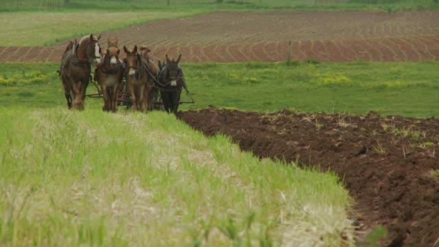 vídeos de stock, filmes e b-roll de amish menino e cavalos plowing field - amish