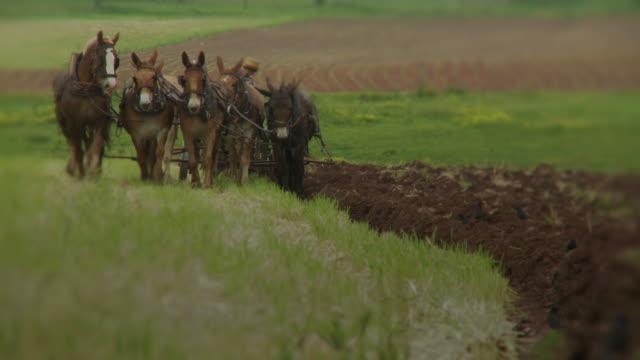 vídeos de stock, filmes e b-roll de amish menino plowing um campo - amish