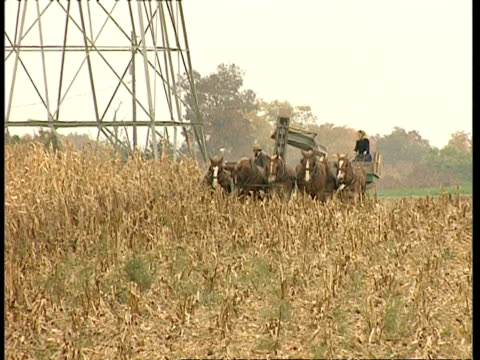 MWA Amish couple operating horse-drawn harvester