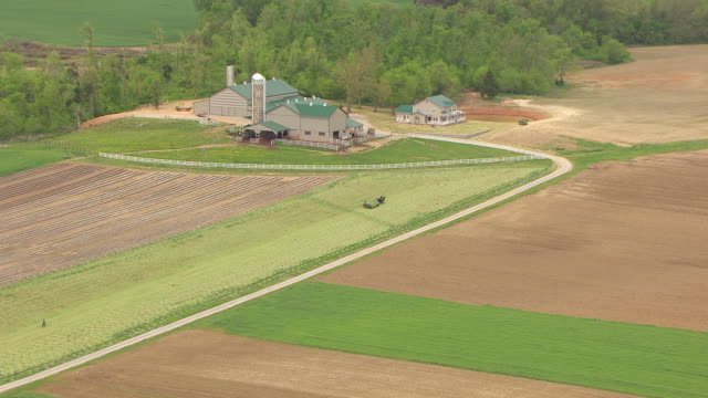ws aerial amish farmer with horse pulling cart in field / kentucky, united states - amish stock videos & royalty-free footage