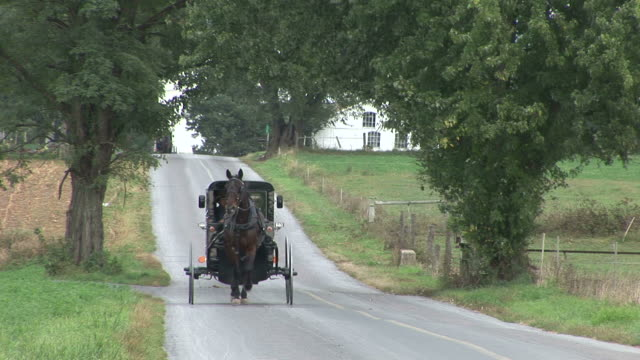 vidéos et rushes de amish horse and buggy next to farm in lancaster, pennsylvania - voiture attelée