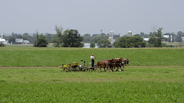 vídeos de stock e filmes b-roll de ws amish man working at traditional farm with horses pulling tractor / intercourse, pennsylvania, united states - amish