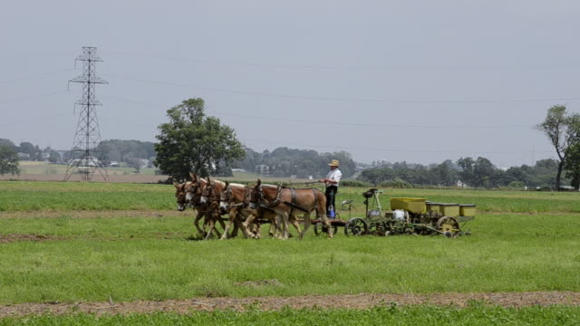 WS Amish man working at traditional farm with horses pulling tractor / Intercourse, Pennsylvania, United States
