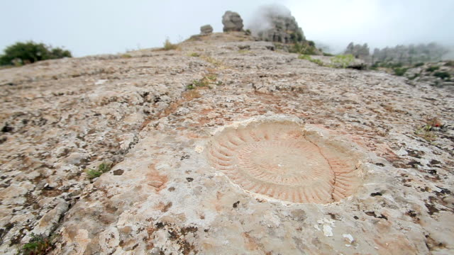 C/U ammonite fossil, landscape (dolly track)