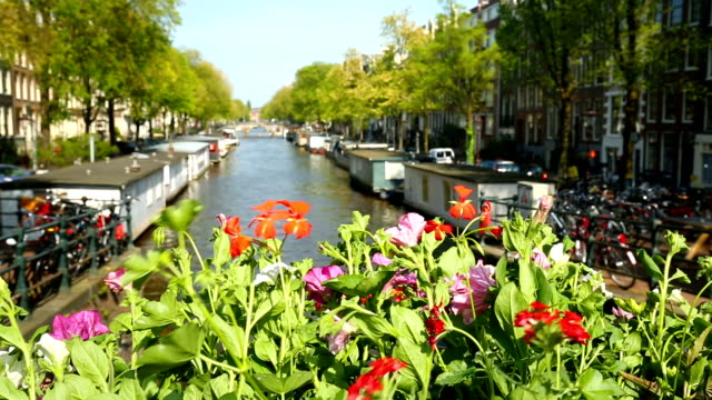 amsterdam with canal and flowers - olanda settentrionale video stock e b–roll