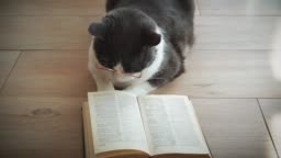 Amusing, funny cat in round yellow glasses reads a book lying on a wooden floor