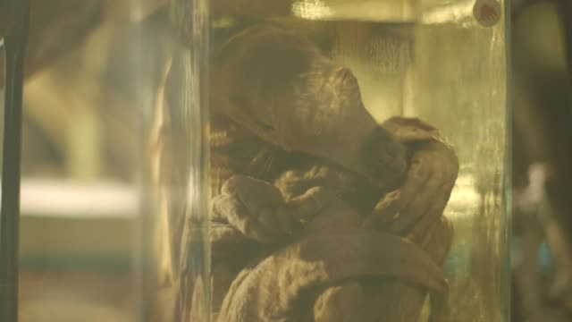 an aardvark preserved in a glass jar - curled up stock videos and b-roll footage