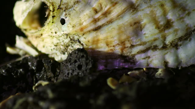 an abalone shell inside yongcheon cave (unesco world natural heritage site) in jeju island, south korea - seashell stock videos & royalty-free footage