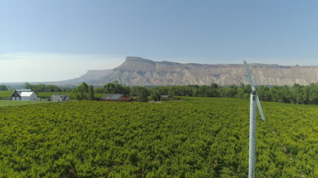 An Aerial Drone Shot of a Peach Tree Orchard and an Orchard Fan with Mount Garfield in the Background on a Sunny Day in Palisade, Colorado