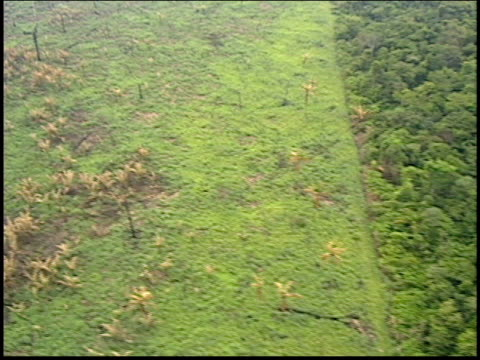 an aerial shot shows deforestation of the amazon rainforest - roraima state stock videos and b-roll footage