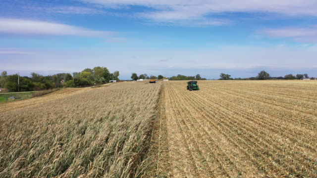 an aerial view from a drone shows a combine being used to harvest the corn in a field at the hansen family farms on october 12 2019 in baxter iowa... - maize stock videos & royalty-free footage