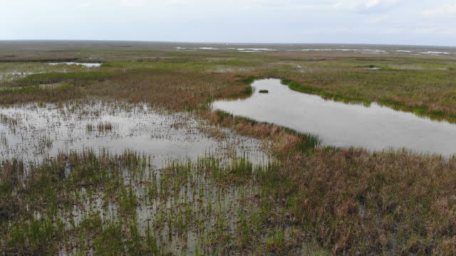 vídeos de stock, filmes e b-roll de an aerial view from a drone shows stormwater treatment area 3/4 that are part of a constructed wetlands to remove and store nutrients through plant... - parque nacional de everglades