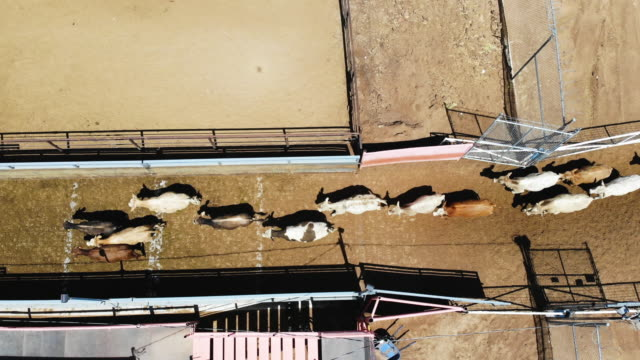 an aerial view from a drone shows workers as they process cattle from mexico after they were brought into the united states through a gate in the... - cattle stock videos & royalty-free footage