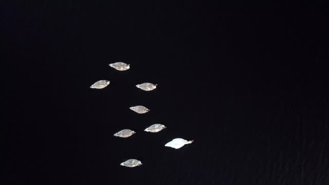 an aerial view of 8 mute swans in a lake, roscommon, ireland. - bird watching stock videos & royalty-free footage