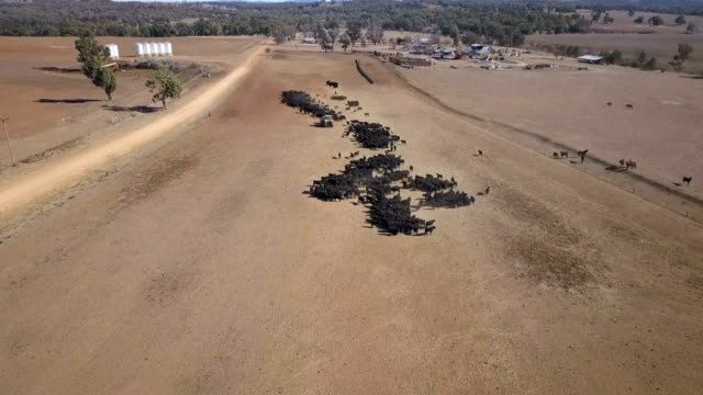 vídeos y material grabado en eventos de stock de an aerial view of a cattle feeding operation on the property 'toorawandi' near coonabarabran new south wales australia on 19 june 2018 the farm is... - sequía