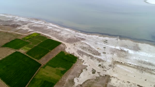 an aerial view of cultivated fields near the lake - punjab pakistan bildbanksvideor och videomaterial från bakom kulisserna
