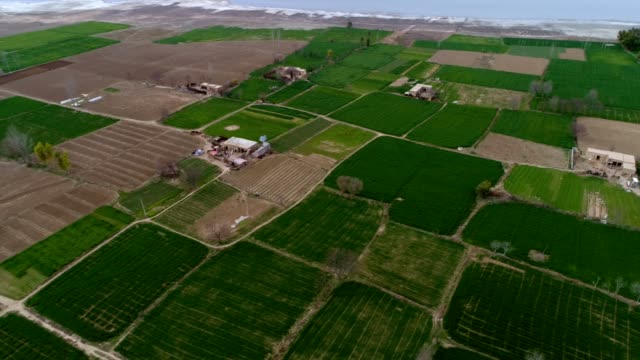 vidéos et rushes de an aerial view of cultivated fields near the lake - province du panjab