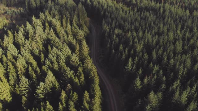 an aerial view of evergreen trees with a single winding path leading through it, on june 05 2021, in somerset, united kingdom. - footpath stock videos & royalty-free footage