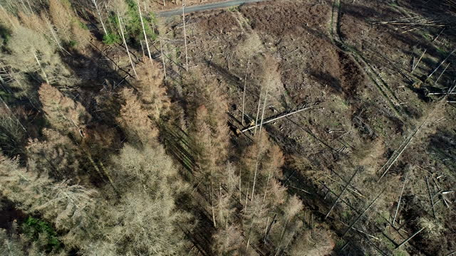 an aerial view of large deforestation areas, dead trees and forest dieback. climate change is taking its toll on forests in germany, on march 19,... - pine stock videos & royalty-free footage
