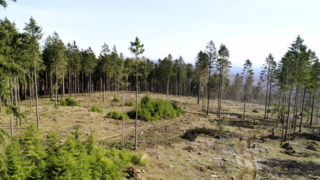 an aerial view of large deforestation areas, dead trees and forest dieback. climate change is taking its toll on forests in germany: long periods of... - geographical locations stock videos & royalty-free footage