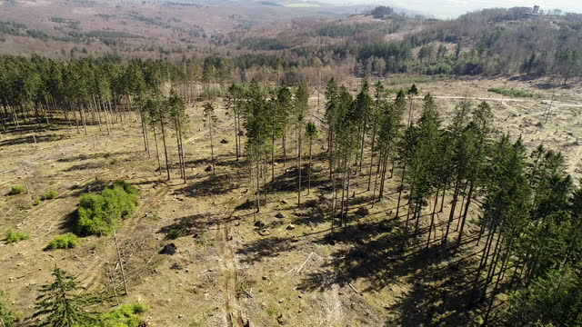an aerial view of large deforestation areas, dead trees and forest dieback. climate change is taking its toll on forests in germany: long periods of... - pine stock videos & royalty-free footage