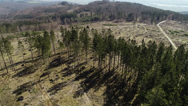 an aerial view of large deforestation areas, dead trees and forest dieback. climate change is taking its toll on forests in germany: long periods of... - ausgedörrt stock-videos und b-roll-filmmaterial