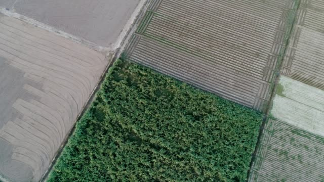 an aerial view of ploughed and agricultural land through drone - punjab pakistan stock videos and b-roll footage