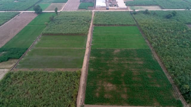 an aerial view of ploughed fields and agricultural land through drone - punjab pakistan stock videos & royalty-free footage
