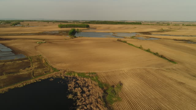 an aerial view of rice fields on may 16 2017 in wuchang heilongjiang province china wuchang is a major rice growing area in northern china - einzelner senior stock-videos und b-roll-filmmaterial