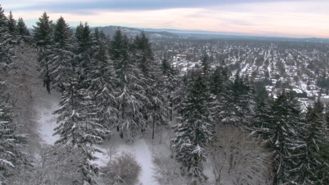 an aerial view of tall trees covered in snow with a city in the background. - fatcamera stock videos & royalty-free footage