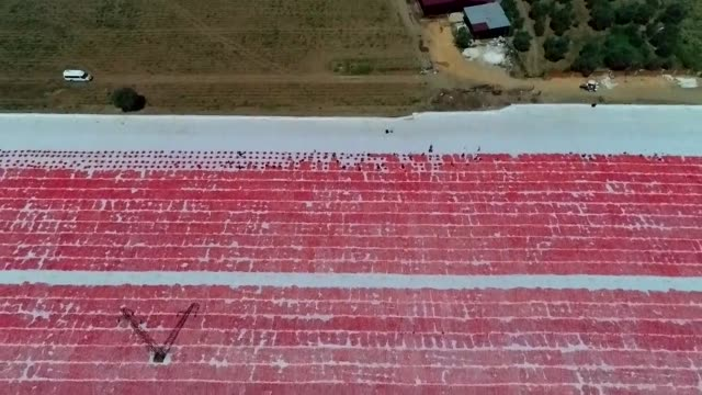 an aerial view of tomatoes being dried in the sun in izmir, turkey on july 27, 2019. tomatoes, collected by seasonal workers, are loaded onto trucks... - tomato stock videos & royalty-free footage