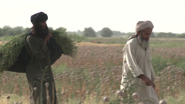 An Afghan farmer walks with a friend as he hauls a bundle of weeds from a poppy field.
