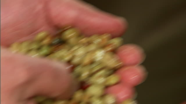 an agronomist handles coffee beans. - 農学者点の映像素材/bロール