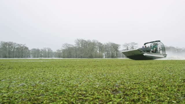 an airboat speeds through floating salvinia (fern) in the atchafalaya river basin swamp in southern louisiana under an overcast sky - louisiana stock videos & royalty-free footage