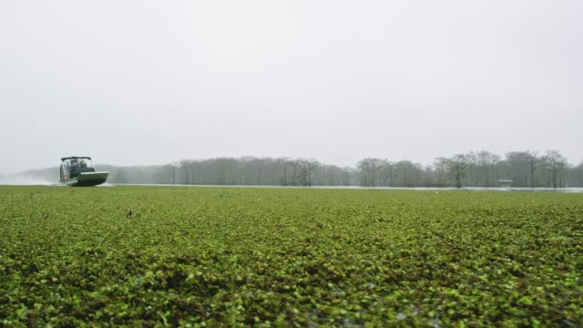 an airboat speeds through floating salvinia (fern) in the atchafalaya river basin swamp in southern louisiana under an overcast sky - fern stock videos & royalty-free footage