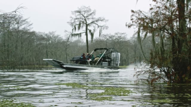 an airboat swamp tour in the atchafalaya river basin swamp in southern louisiana under an overcast sky - louisiana stock videos & royalty-free footage