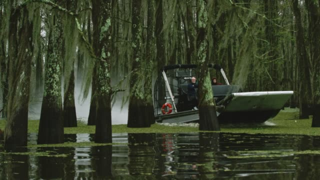 an airboat swamp tour navigates through a forest of cypress trees covered in spanish moss in the atchafalaya river basin swamp in southern louisiana under an overcast sky - spanish moss stock videos & royalty-free footage