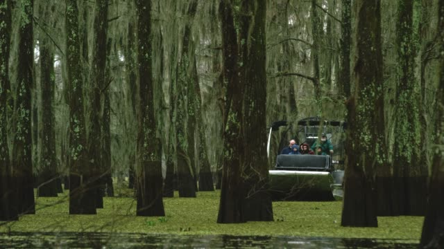 an airboat tour navigates through a forest of cypress trees covered in spanish moss in the atchafalaya river basin swamp in southern louisiana under an overcast sky - fern stock videos & royalty-free footage