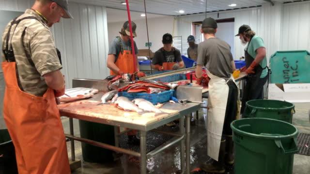 vídeos y material grabado en eventos de stock de an alaska seafood company prepares fish for customers, including cleaning, packing, shipping. - pescado y mariscos