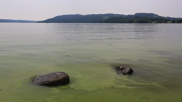 an algal bloom of blue green algae on lake windermere, lake  district, uk. - cianobatterio video stock e b–roll