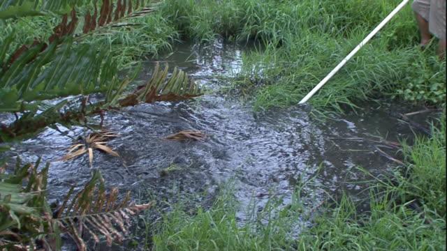 vídeos de stock e filmes b-roll de an alligator attacks a pole being thrust into a pond. - caça
