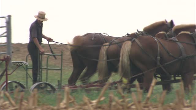 vídeos de stock e filmes b-roll de an amish farmer guides horses through a field. - amish