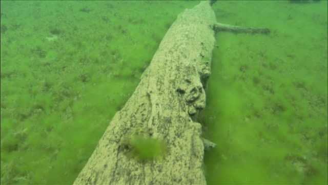 An ancient log stretches across the lakebed of Oregon's Clear Lake. Available in HD