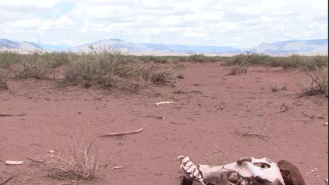an animal skeleton lies strewn across a dirt clearing. - animal skeleton stock videos & royalty-free footage