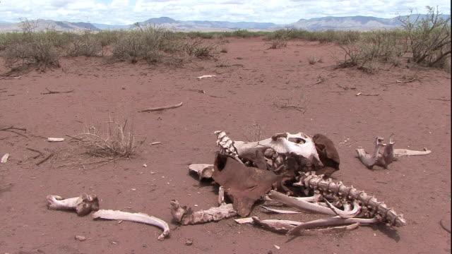 an animal skeleton lies strewn across a dirt path. - animal skeleton stock videos & royalty-free footage